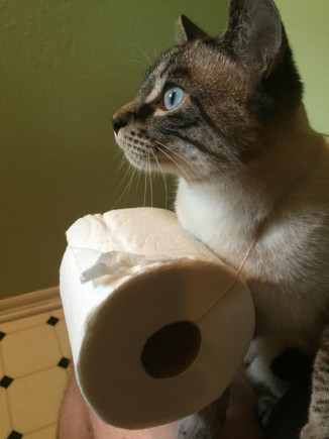 Per Quelli Che Pensano Che I Gatti Siano Degli Animali Inutili