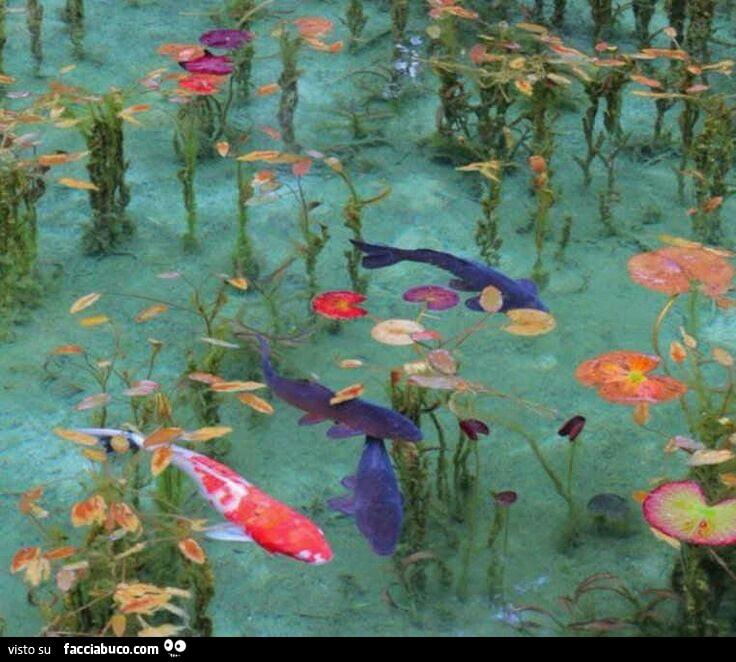 Pesci colorati nello stagno for Pesci di stagno