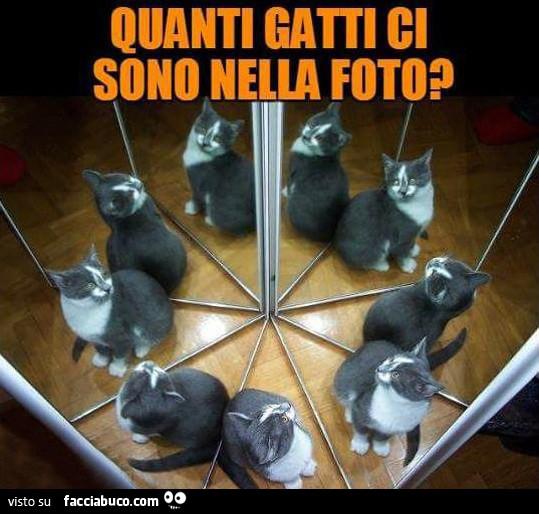 Quanti gatti ci sono nella foto for Quanti senatori ci sono
