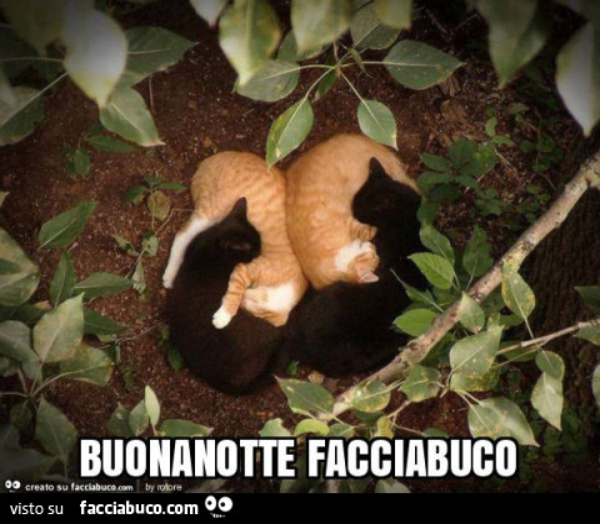 Buonanotte Facciabuco Facciabucocom